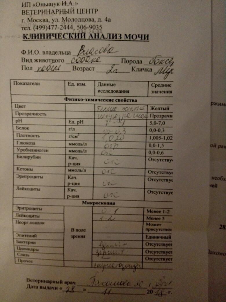 Москва, Мустафа, кобель, 29.01.16 8Qu9mkbZT_Y