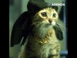 Опасные гангста-котики