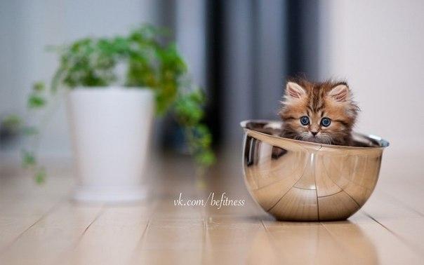 Чтобы нравиться девочкам, надо быть умным, красивым, богатым или котом…. (1 фото) - картинка