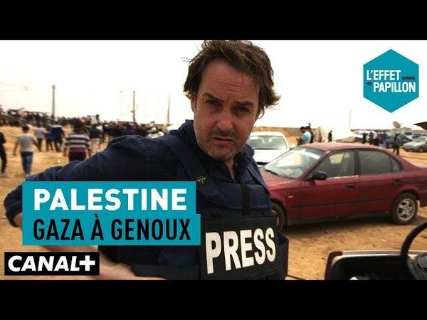 Palestine : Gaza à genoux - L'Effet Papillon – CANAL
