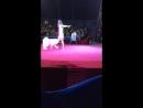 Цирк Шапито Алле
