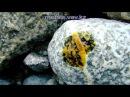 Поиск платины и золота в речных камнях