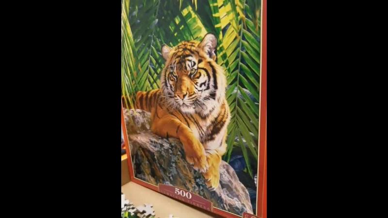 мой братан тигр