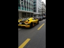 Bike vs Eggs and Avens Geneva