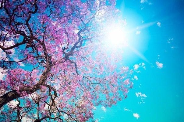Цветущая сакура в парке Токио,