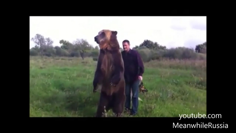 Russian Bear Shows Off His Amazing Tricks