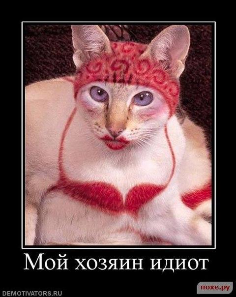 Фото №299290053 со страницы Дмитрия Клягина