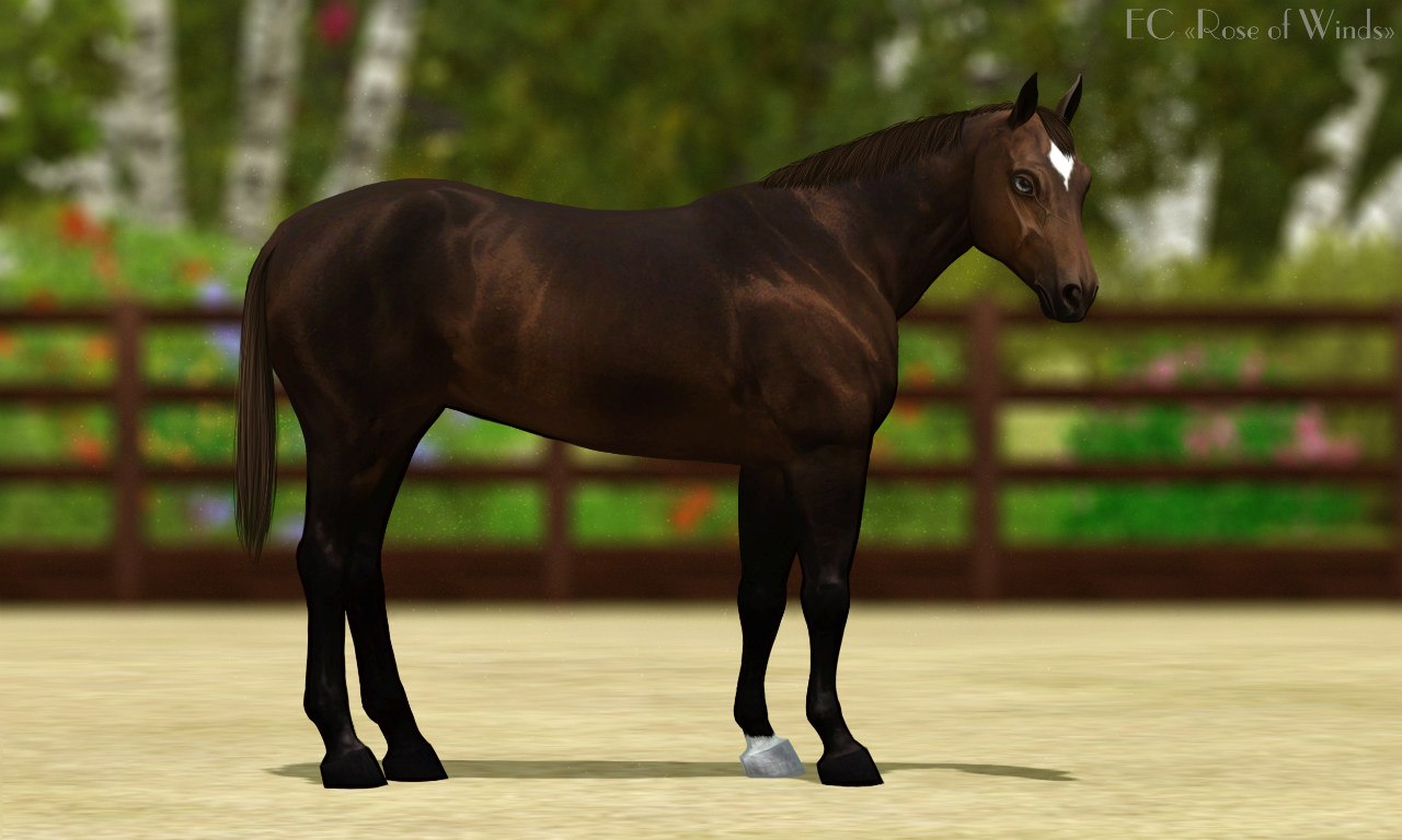 Регистрация лошадей в RHF 1.1 - Страница 40 Pe15xrAKxaQ
