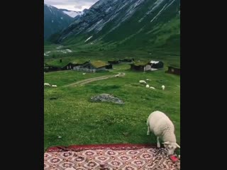 God morgen!🐑 - #norway #norge