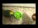 кот и попугай едят с одной миски!прикол!