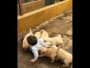 Жестокое нападение собак на человека