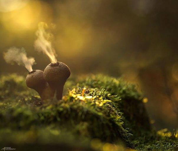 Мистический мир экзотических грибов в волшебных фотографиях
