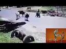 Kung fu cow kicks Technic Explained