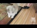 Meet Cody The Screaming Dog