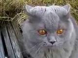 говорящий кот ГАД