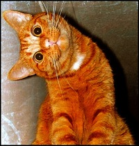 Гифки ржачные коты