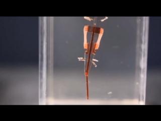 Робот с мышцами