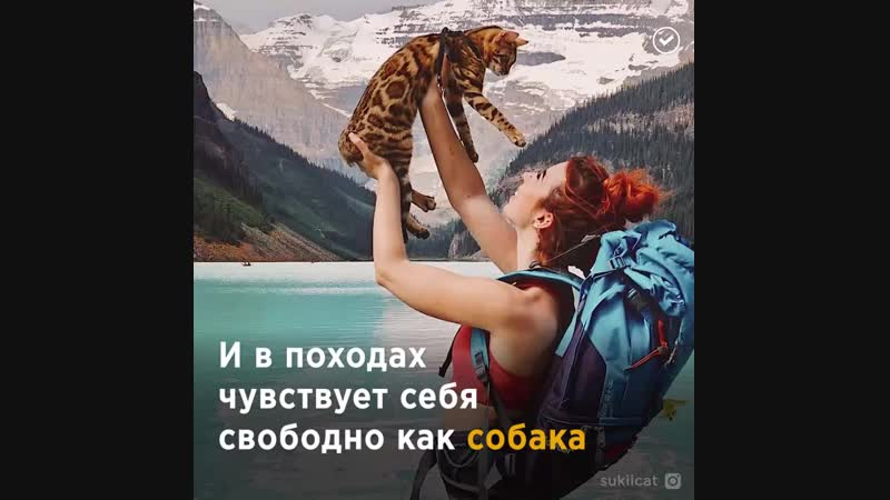 История бенгальской кошки, которая стала звездой Instagram - vk.com/p.obrazovanie