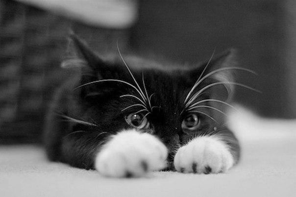 картинки котят на аватарку: