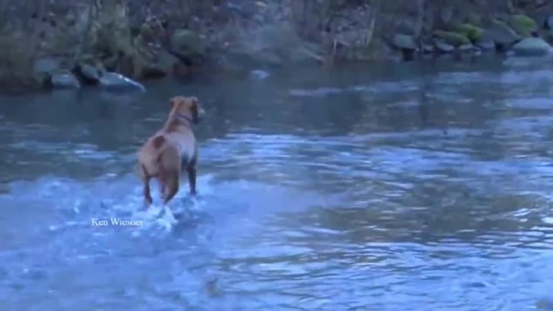 Собачка рыбачит