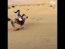 [v-s.mobi]Арабские лошади.mp4
