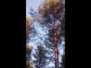 Пение птиц в лесу на закате...