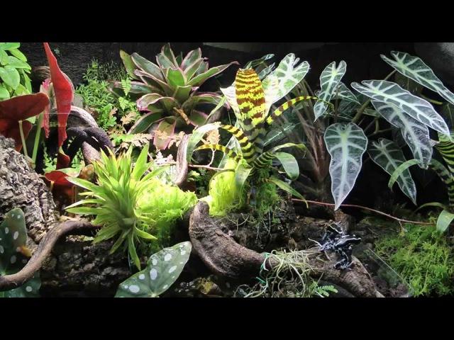 Paludarium Regenwald Terrarium Dendrobaten