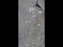 Побег из курятника
