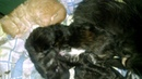 Как спят котята Мейн-кун Сладкий сон маленьких котят Sweet dream little kitten Like sleeping kitten