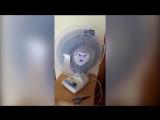 Вентилятор нацист