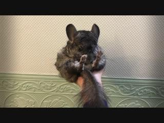 Наши любимые животные #1: Артур, Сьюзи и Боня
