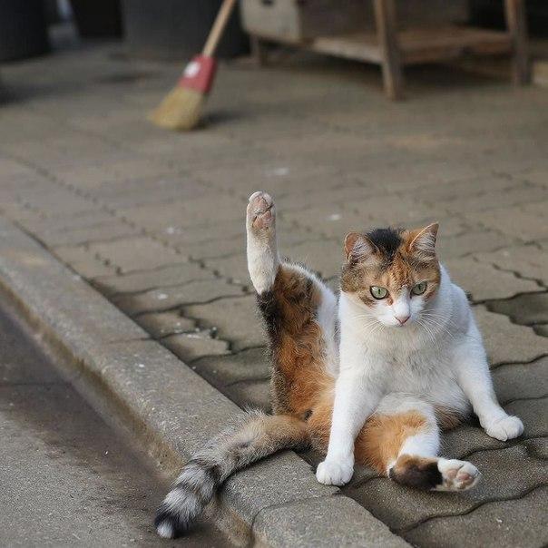 Токийские коты Масаюки Оки