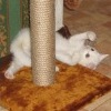 Котенок Пэрис (Марсик) помогает своим собратьям