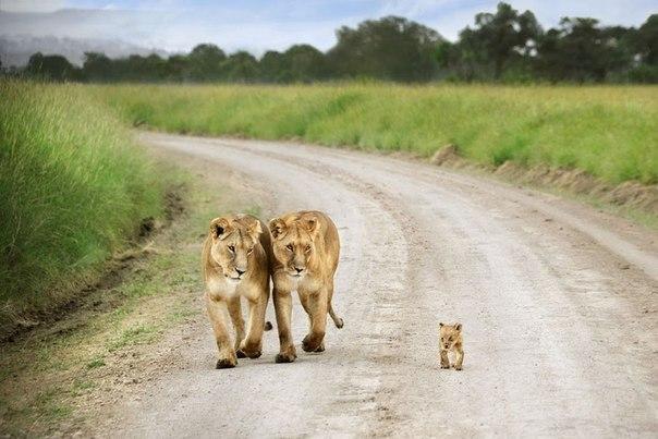 Счастливая семья)