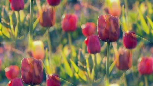 Цветочные и растительные фоны - Страница 3 OcwPJnfw8J0
