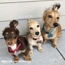—Разве можно мерить счастье в собаках? !