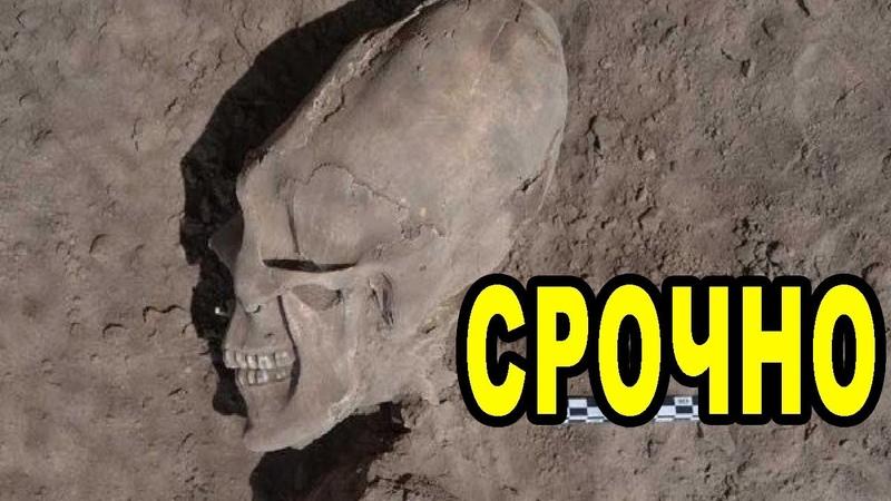 Вот это находка! Эти невероятно-возмутительные артефакты – останки существ неизвестной расы!