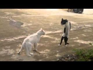 Смішні приколи з котами.