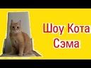 Шоу кота Сэма. Четвертый выпуск
