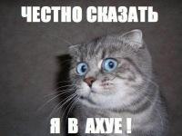 Дмитрий Тищенко, 20 декабря , Киров, id26567437