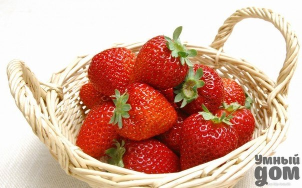 Удобрения для клубники из хлеба, из сыворотки, из помета, из крапивы Клубника, одна из любимых ягод, которую выращивают на своих участках большинство дачников. Добиться от неё хорошего урожая не совсем просто, ведь ягода требовательна к почве, дефицит того или иного элемента, влияет как на вкусовые качества клубники, так и внешние свойства и количество сбора ягод. В этой статье мы коснёмся темы, целесообразно ли вносить удобрение клубники народным способом и существуют ли удобрение для…