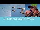 Охота на утку с манками и чучелами