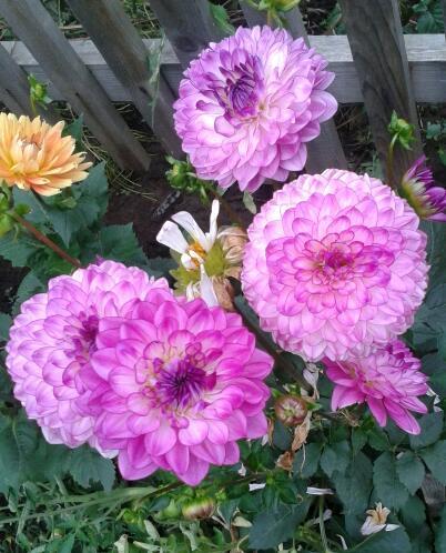 Цветы у Ликки MYZxFC47yK8