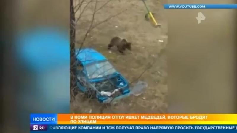 """Мой родной город Печора. Медведи на улицах. """"Выходишь утром в школу, а в подъезде тюлень греется о радиатор. И давай его пинком"""