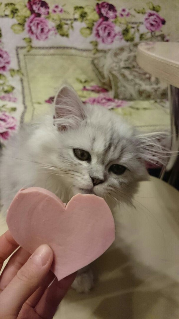 Любви достоин только кот