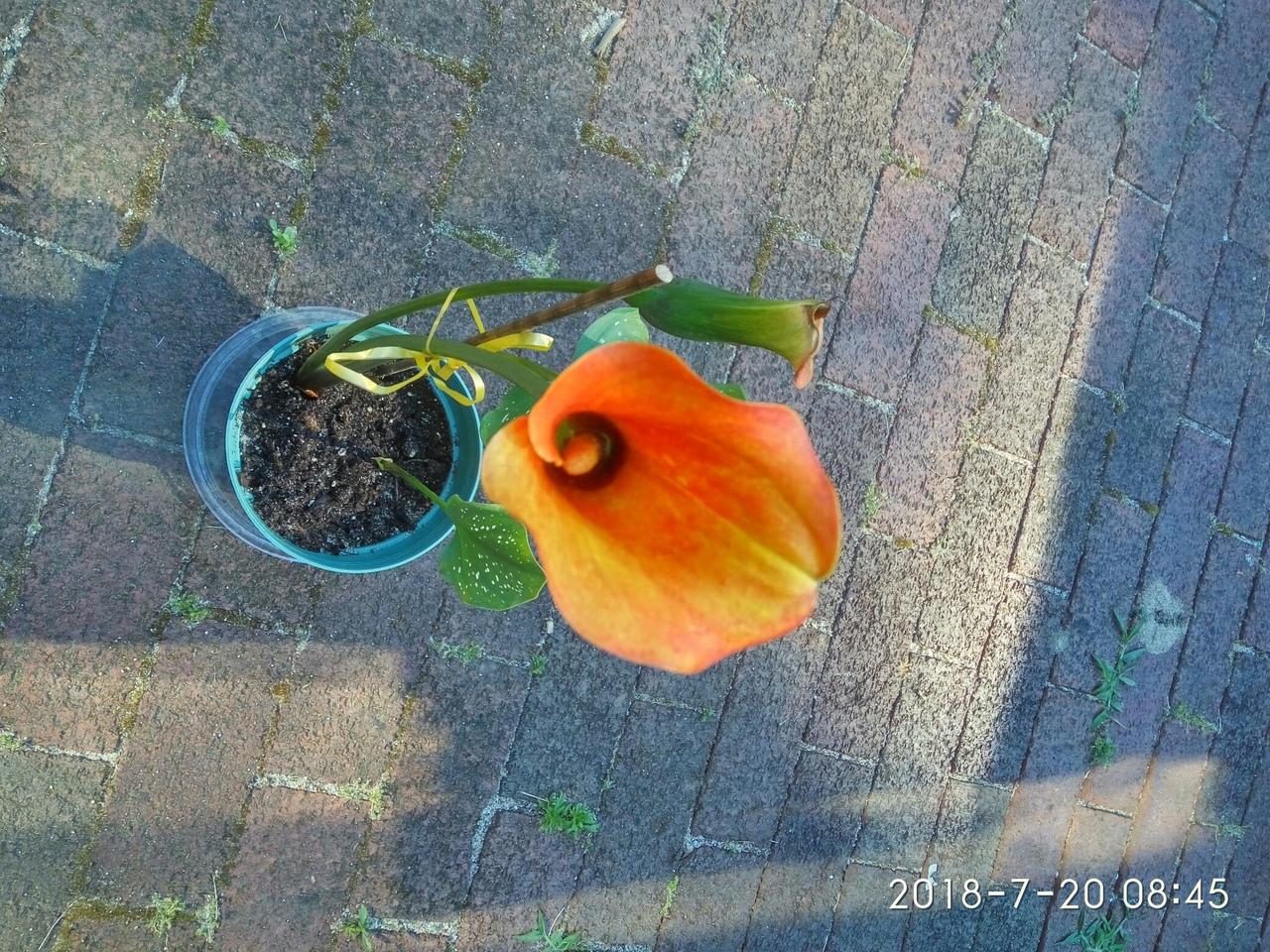 "Мои цветочки ... Занятие для души)))""  3qB4tuXbF-c"