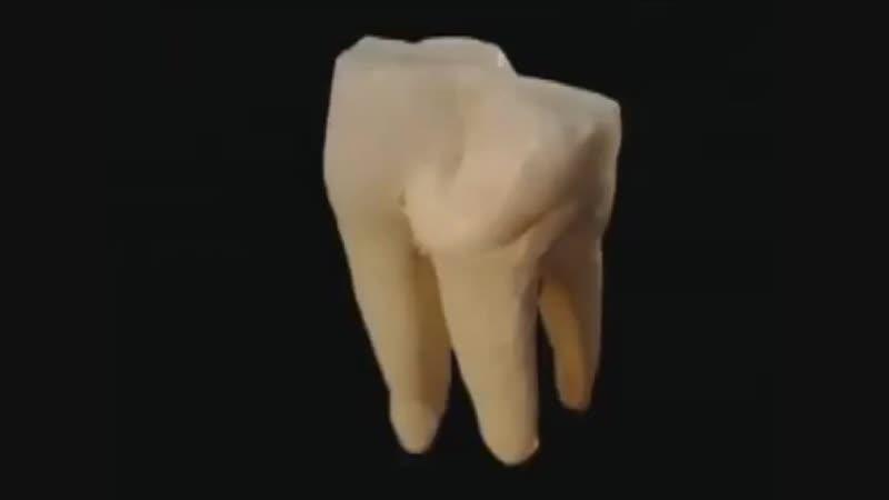 Зуб под микроскопом