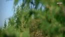 Посмотрите это видео на Rutube Тайна скал Дидюля