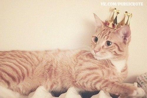 Кішки улюблені тварини світу vk