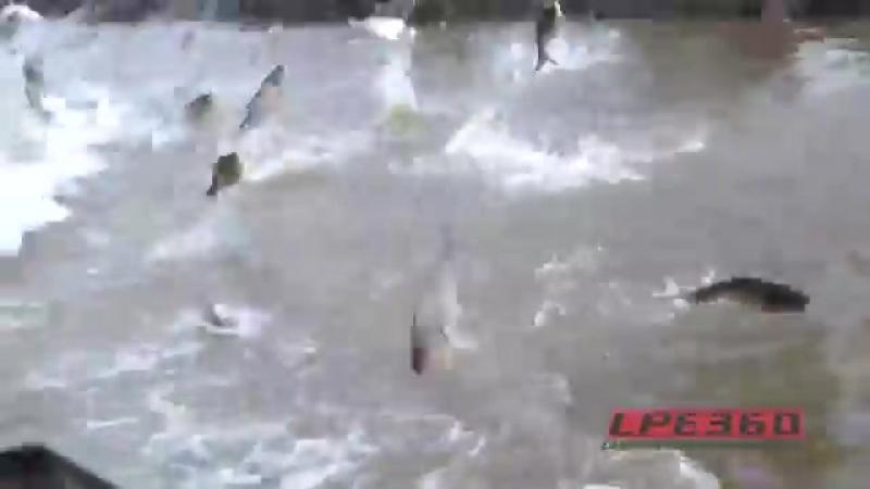 Рыба сама запрыгивает в лодку!